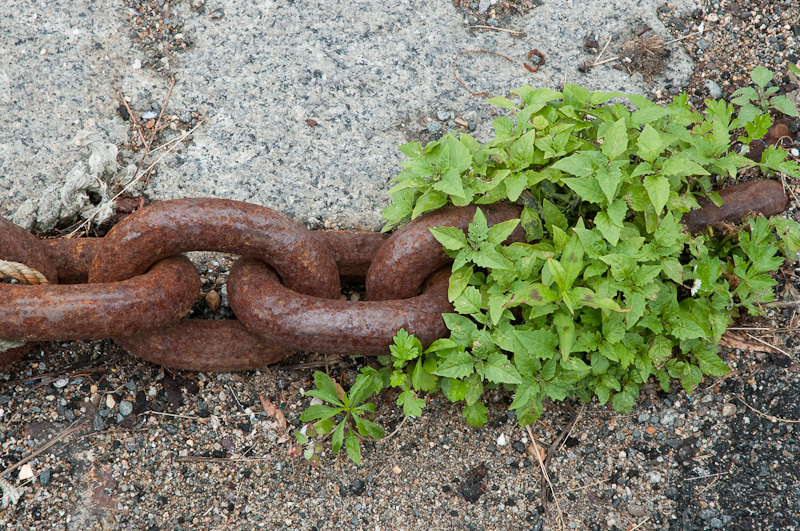 Anchor chain and weeks