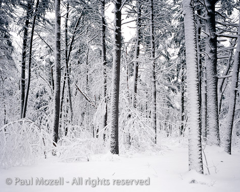 Heavy Fresh Snow