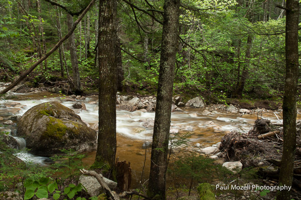 Drake's Brook