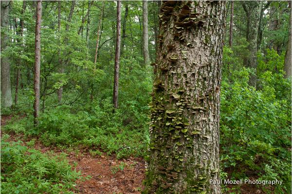 Lichen-covered tree, Andover, MA