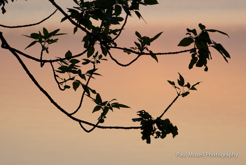 Sunset Silhouette, Wakefield, Massachusetts