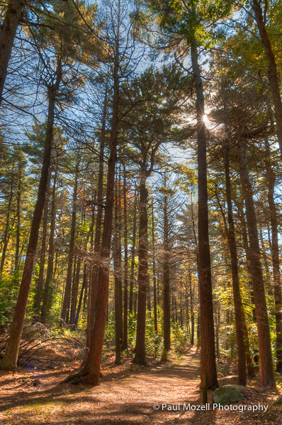 A walking trail through Ravenswood, forested land in Gloucester, MA