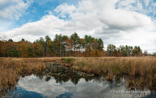Ipswich River Wildlife Sanctuary, Topsfield, MA