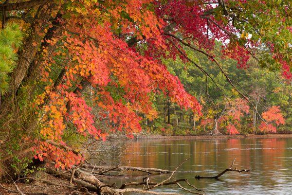 Fall colors in Massachusetts