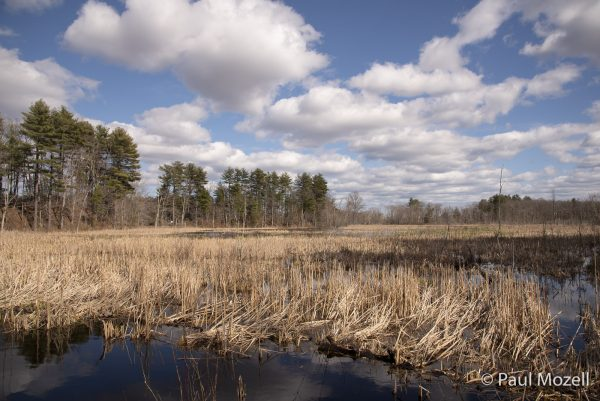 Early spring near the Ipswich River.