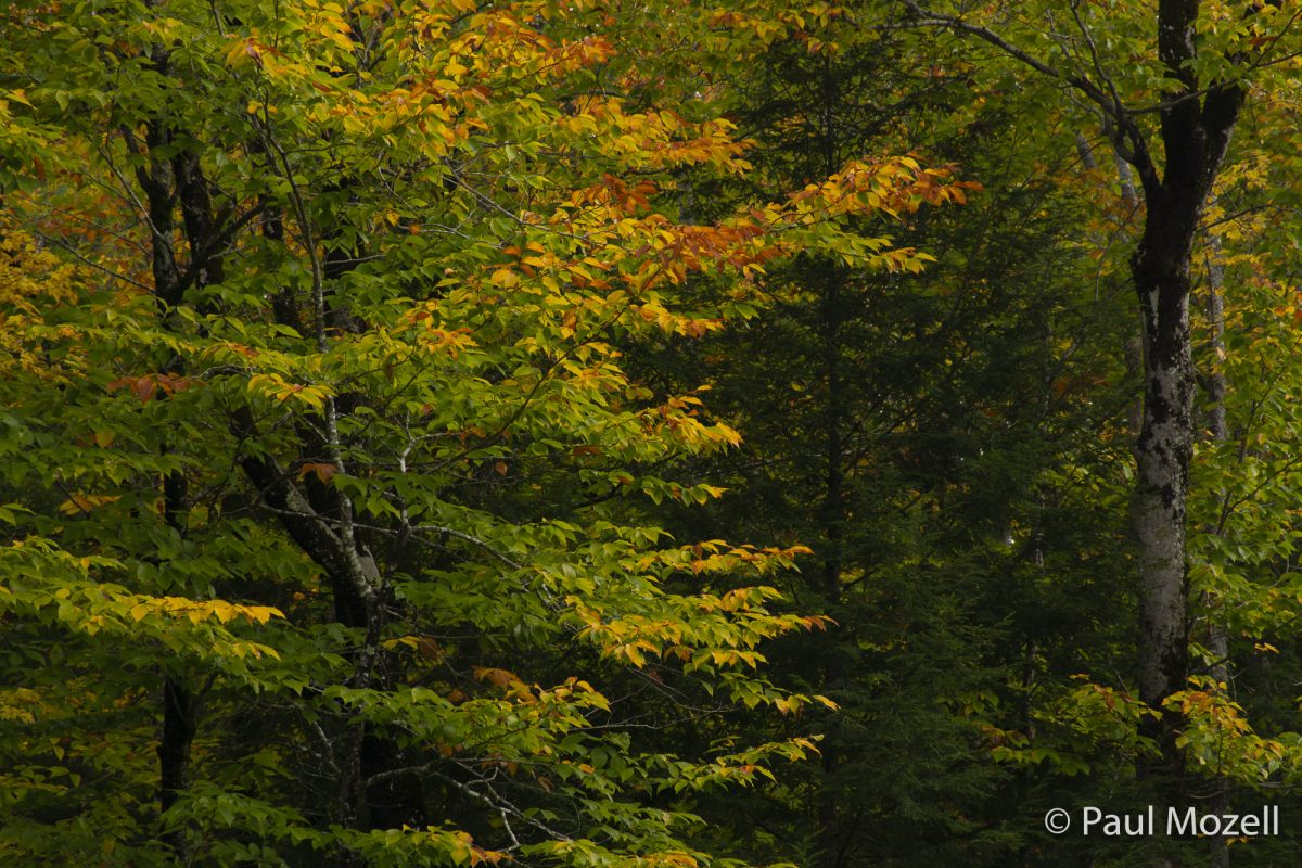 "Subtle colors of autumn during ""peak foliage"" time in Bridgton, Maine."