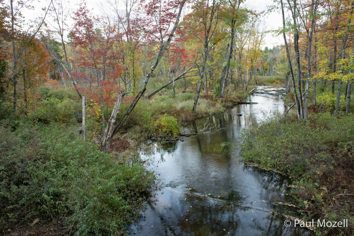 Stevens Brook in Pondicherry Park, Bridgton, Maine